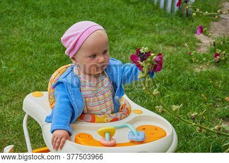 Baby In A Walker Holding A Flower, In The Yard Sits A Baby In A Walker And Holds A Flower In His Han