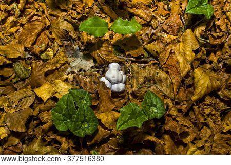 Mushrooms In The Foresta Umbra, Gargano, Apulia, Italy