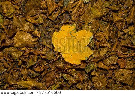 Leaf In The Foresta Umbra, Gargano, Apulia, Italy