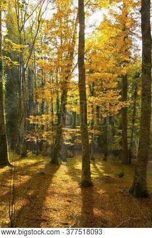 Autumn In The Foresta Umbra, Gargano, Apulia, Italy