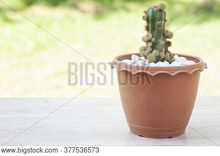 Small Cactus With Shoots In Brown Plastic Pot Placed On A Wooden Table By The Balcony Of The House.