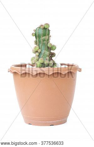 Small Cactus With Shoots In Brown Plastic Pot Isolated On White Background.
