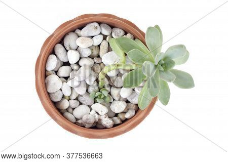 Top View Of Cactus Or Succulent Plant In Brown Plastic Pot Isolated On White Background.