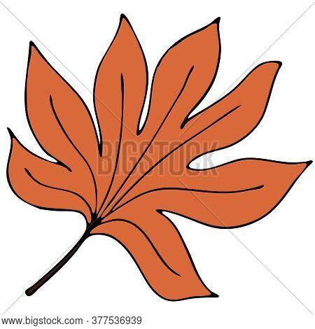 Beautiful Autumn Carved Orange Leaf, Chestnut, Doodle Vector Element, Black Outline
