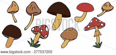 Autumn Harvest From The Forest - Edible And Poisonous Mushrooms, Freehand Drawing, Vector Set Of Ele