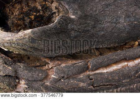 Bark Of Old Tree Horizontal Background. Horizontal Photo.