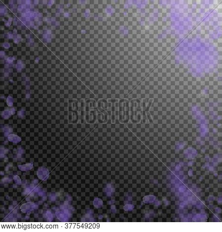 Violet Flower Petals Falling Down. Authentic Romantic Flowers Vignette. Flying Petal On Transparent