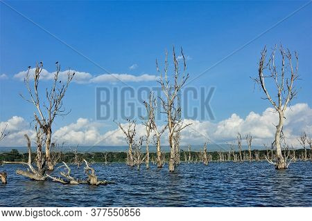 A Strange Lake. In The Blue Water, Against The Background Of The Azure Sky, There Are Many Trunks Of