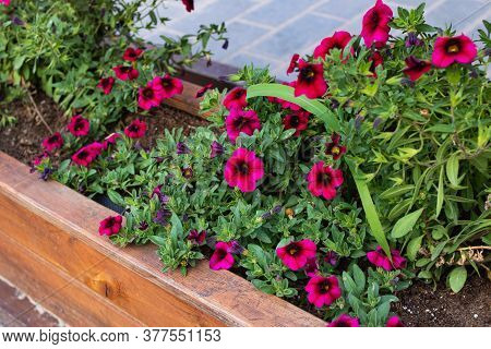 Small Purple Flowers Among Green Leaves On Wooden Flowerbed