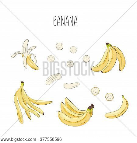Banana Set Of Vector Drawings. Isolated Hand Drawn Bouquet, Bunch, Banana Peel And Sliced Pieces. Su