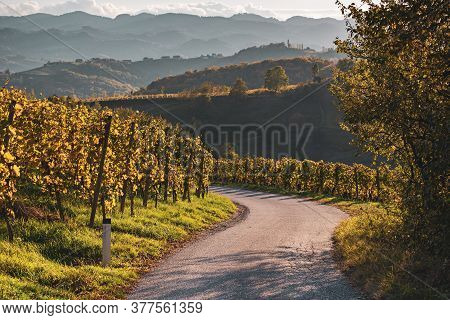 Slovenian And Austrian Wine Road Among Vineyards In Slovenia At Sunset. Scenic Landscape And Nature