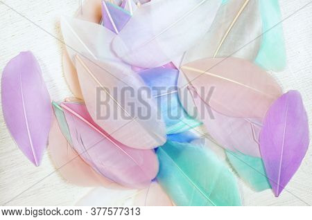 Feathers in pastel colors. Beautiful light colored feathers
