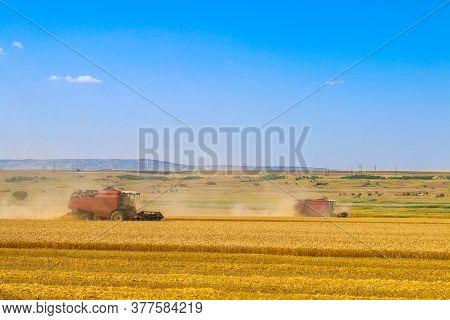 Harvester Machine Working In Field. Combine Harvester Agriculture Machine Harvesting Golden Ripe Whe