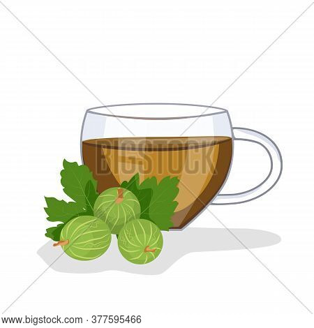 Tea With Gooseberries In A Glass Cup, Gooseberries Are Lying Nearby. Vector Illustration