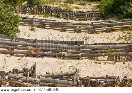 Strengthening The Sand Dune With Tree Branches On The Curonian Spit