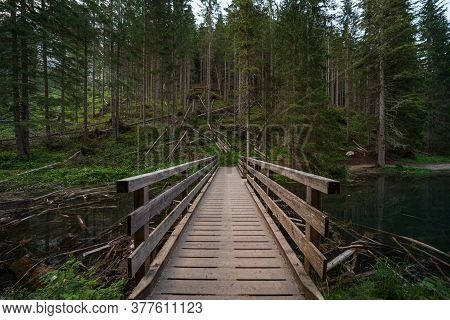 A Wooden Bridge Leads Into The Green Forest In South Tyrol, A Naturalistic Mountain Landscape