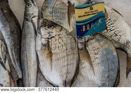 Closeup Of Hake And Sea Bream On A Fish Market On White Background. Healthy Fresh Nutrition. Sea Oce
