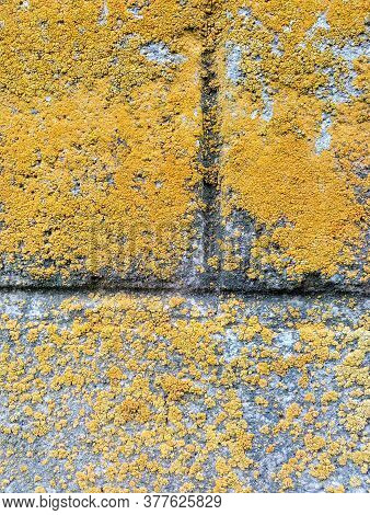 Vintage Texture Of Old Brickwork Covered With Moss And Lichen, Close-up, Macro