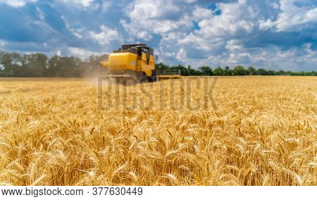 Special Machine Harvesting Crop In Fields, Agricultural Technic In Action. Ripe Harvest Concept. Cro