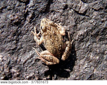 Toad Sitting On A Stone, On A Sunny Summer Day