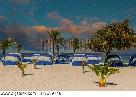 Blue And White Covered Chaise Lounges On A Beach With Palm Trees