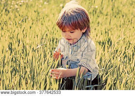 Crop Planting At Fields. Cute Little Farmer Working With Spud On Spring Field. Little Farmer Boy Exa