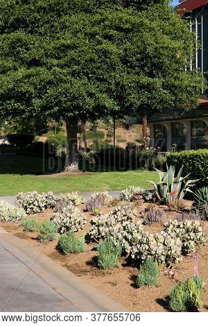 Succulent Shrubs Including Agave Plants And Cacti Besides A Pathway And Manicured Lawn Taken On A Co
