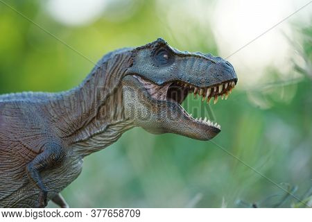 Tyrannosaurus Rex Dinosaurs Toy On Nature Background. Closeup Dinosaur And Monster Model .