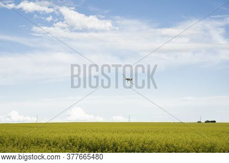 A crop duster flying low sprays a blooming yellow canola field in Rocky View County Canada.