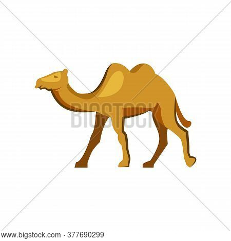 Humped Camel In Desert. Walking Wild Camel. Can Be Used For Topics Like Zoo, Farm, Mammal