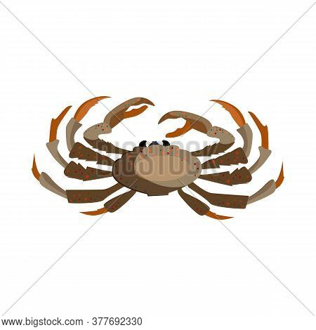 Brown Crab Illustration. Mollusc, Ocean, Seafood. Nature Concept. Illustration Can Be Used For Topic
