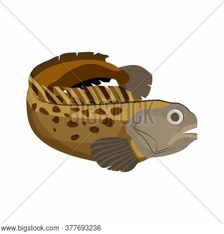 Burbot Freshwater Fish. Long Mottled Skin Ling. Can Be Used For Topics Like Fishing Sport, Market, F
