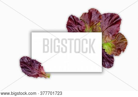 Creative Layout Of Maroon Lettuce Leaves With A Note Card. Flat Lay. Nature Concept.