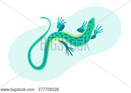 Blue Lizard Vector Illustration. Reptile With Long Body And Tail, Four Legs And Blue Skin. Design Fo