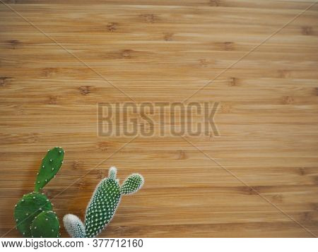 Two Small Green And Prickly Opuntia Cactus Against A Wooden Background