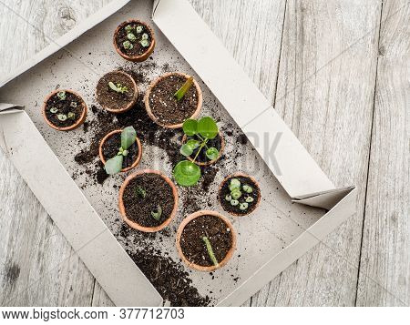 Propagating Multiple Succulents From Cuttings In Small Terracotta Pots On A Wooden Table