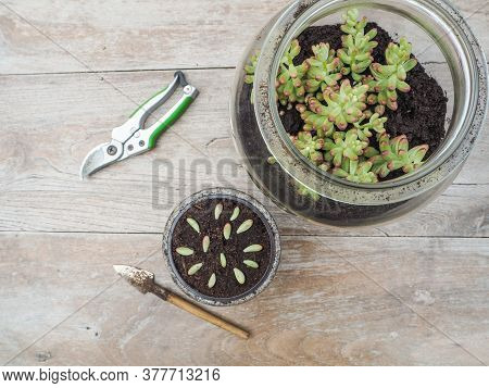 Wooden Table With Garden Tools, A Big Glass Jar With A Succulent Sedum Rubrotinctum Rosea And A Smal