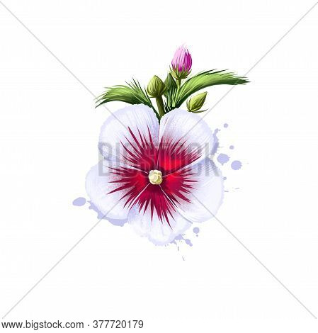 Digital Art Illustration Of Rose Of Sharon Isolated On White. Hand Drawn Flowering Bush Hibiscus Syr