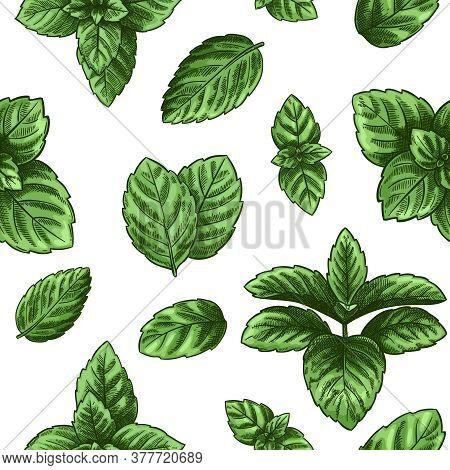 Mint Seamless Pattern. Green Peppermint Leaves, Spearmint Healing Herb. Melissa Botanical Vector Wal