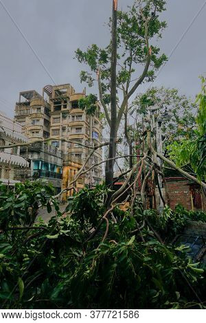 Howrah, West Bengal, India - 21st May 2020 : Super Cyclone Amphan Broke A Tree Which Fell On Street