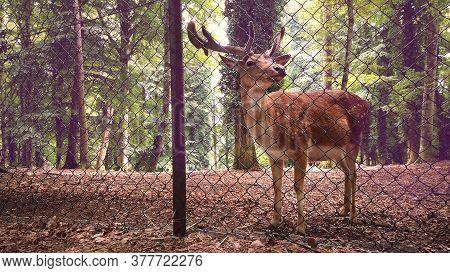 Deer Reserve Stag Background Behind Pens Fence