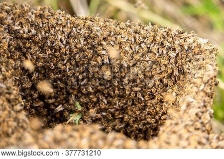 Swarm Of Bees Close-up In A Trapped Bee Collector.