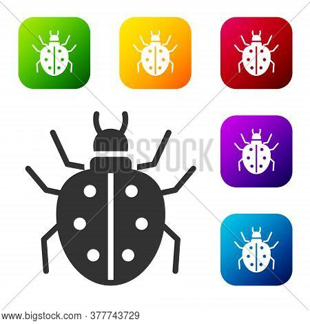 Black Mite Icon Isolated On White Background. Set Icons In Color Square Buttons. Vector