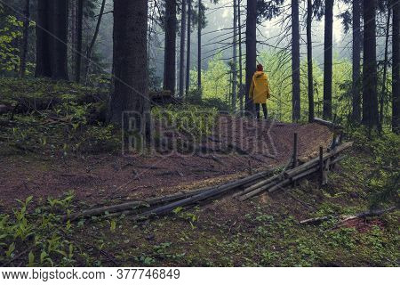 Woman In A Yellow Raincoat On A Forest Path In A Dark Forest