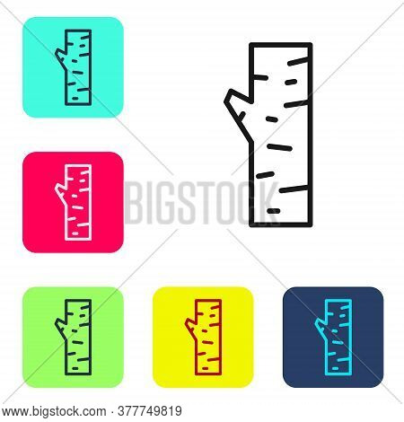 Black Line Birch Tree Icon Isolated On White Background. Set Icons In Color Square Buttons. Vector