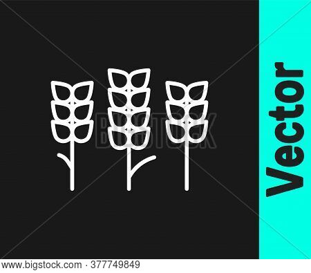 White Line Cereals Set With Rice, Wheat, Corn, Oats, Rye, Barley Icon Isolated On Black Background.