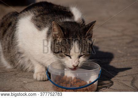 Cat Eating Pet Food. Cat Eating. Feeding The Cat.