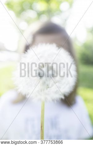 Close-up Of A Blurred Fluffy Dandelion - Little Girl With White Ripe Dandelion With Seeds - Conceptu