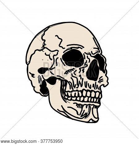 Skull Isolated On White. Mertice, Zombie. White Walkers. Vector Bone Illustration.