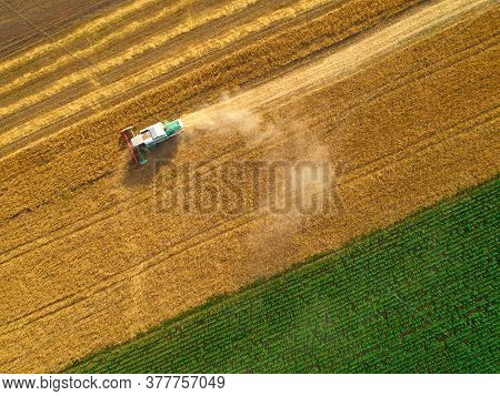 Aerial View Of Wheat Harvest. Drone Shot Flying Over Three Combine Harvesters Working On Wheat Field